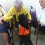 Terapia con perros I
